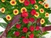 zalna-floristika-cvetlicarna-cvetnik-22