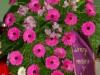 zalna-floristika-cvetlicarna-cvetnik-26