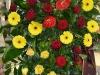 zalna-floristika-cvetlicarna-cvetnik-7